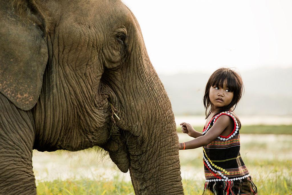 Best Friends V photo by Réhahn - elephant in Vietnam