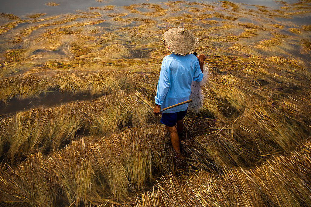 Golden Field photo by Réhahn - fishing in Hoi An Vietnam