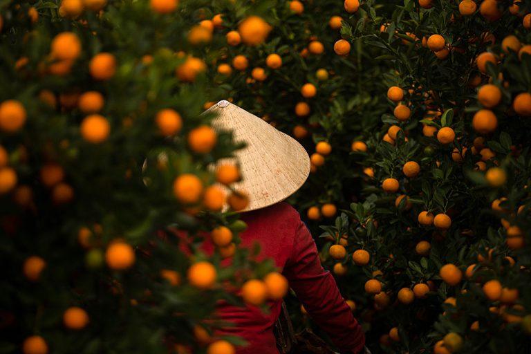 Kumquat par Rehahn photographie à Hoi An - Vietnam