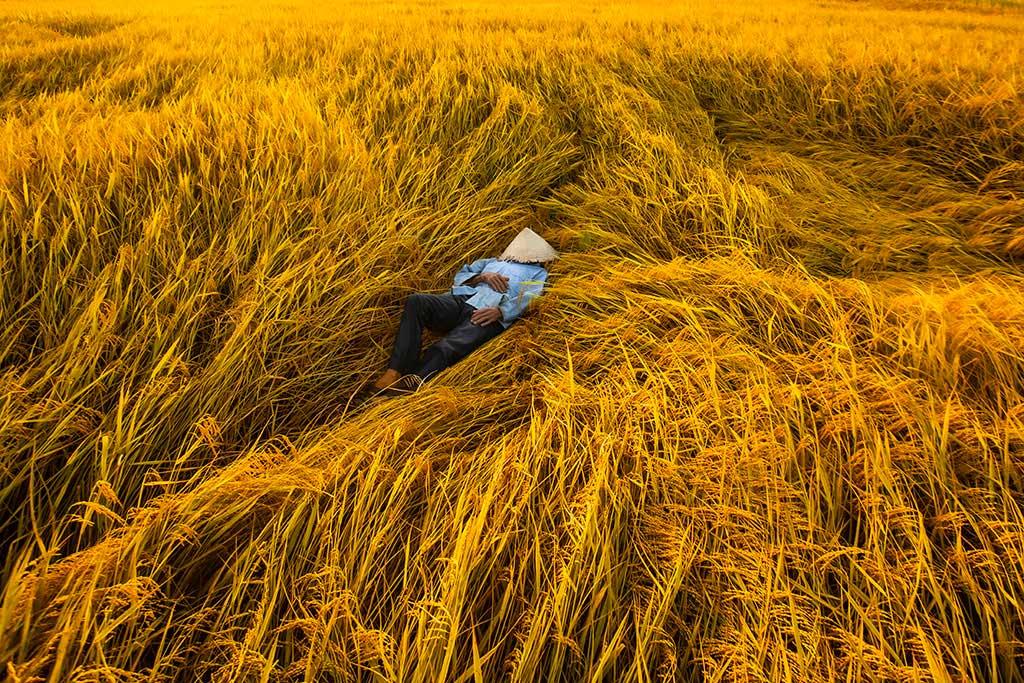 resting-gold